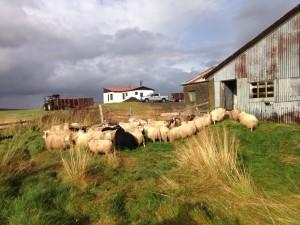 Múlastaðir