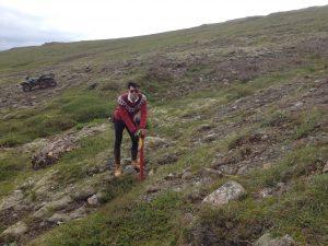 Múlastaðir, Joe gróðursetur furur_13072016HGS (4)