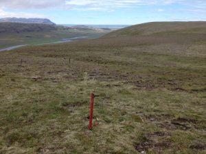 Múlastaðir_Gróðursetning_27072016HGS (1)