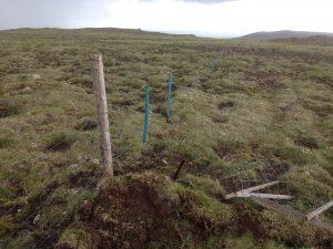 Múlastaðir, Rafgirðing_30062016HGS (6)