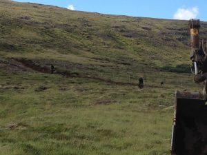 Múlastaðir, slóðagerð og gróðursetning _18082016HGS (3)