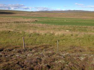 Múlastaðir, Girðingin við túnin virkar 02082016HGS